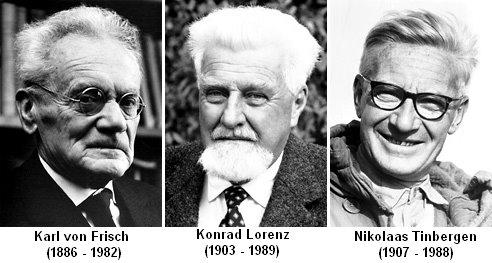 Nobel_Laureates_von_Frisch_Lorenz_Tinbergen.jpg
