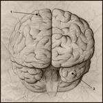 The_Brain_by_soliton.jpg