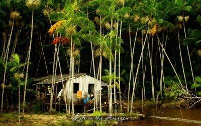 Pérolas do ENEM – Amazônia
