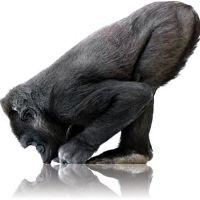Evolução da consciência e direito animal – o debate