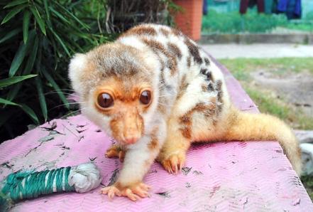 Criatura misteriosa encontrada na China (MEDO!)