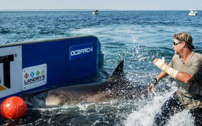 Cientista é quem pega tubarão na unha!
