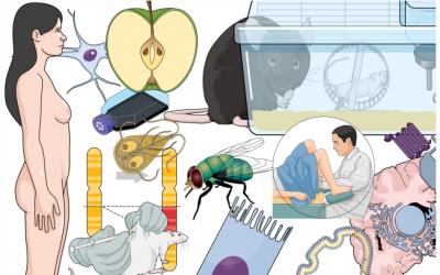 Faça infográficos perfeitos para área de biomed
