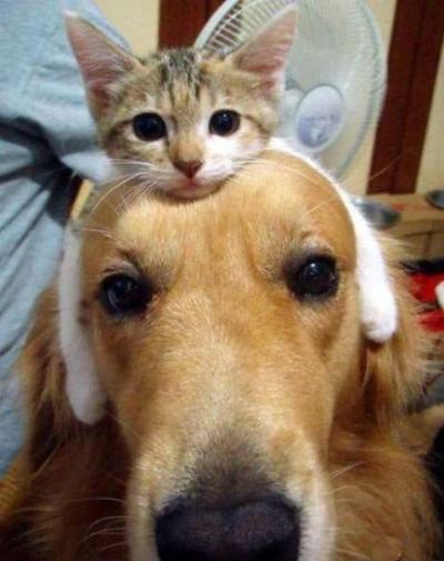cachorro e gato fofinhos