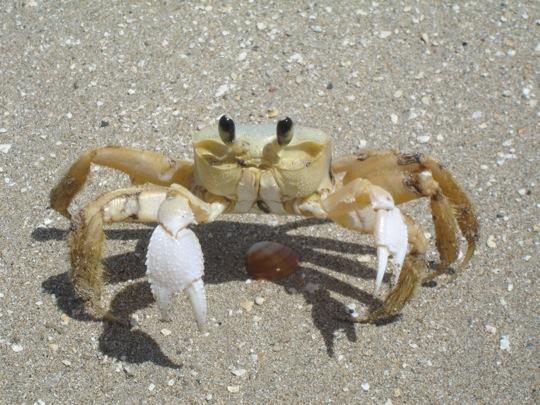 crab_1168557_91334265.jpg