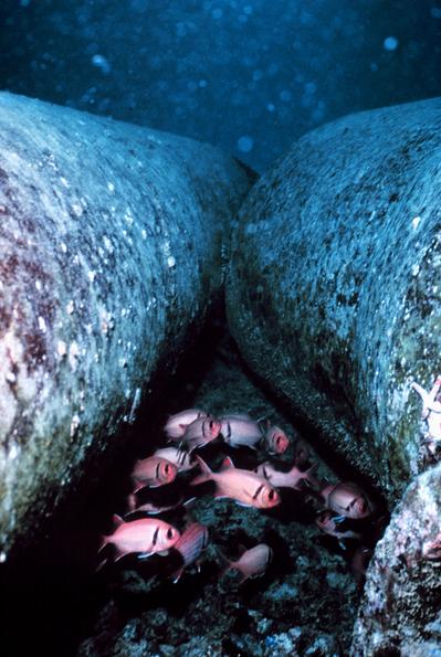 Detrítos ou partículas de neve marinha em torno das tubulações próximas a um recife de coral.