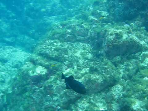 Sabia que os corais fazem barulho?