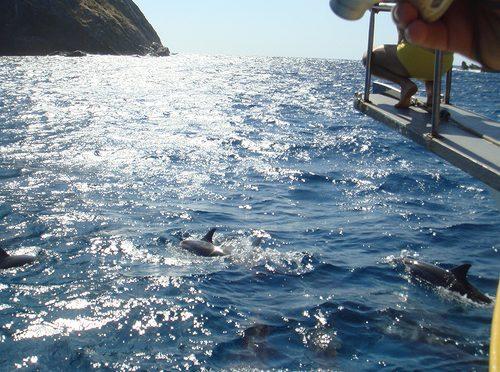 Por que os golfinhos acompanham os barcos?