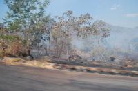 Veja o Cerrado ameaçado pelo fogo