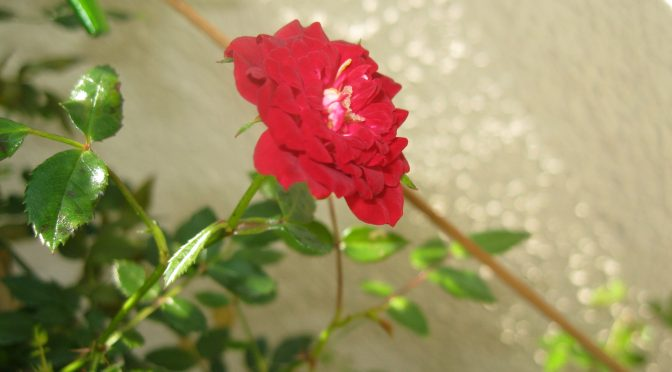 Presente de um beija-flor