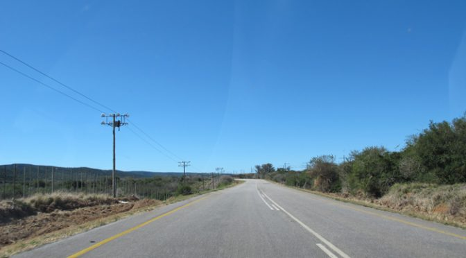 Zebras e girafas são vistas da estrada
