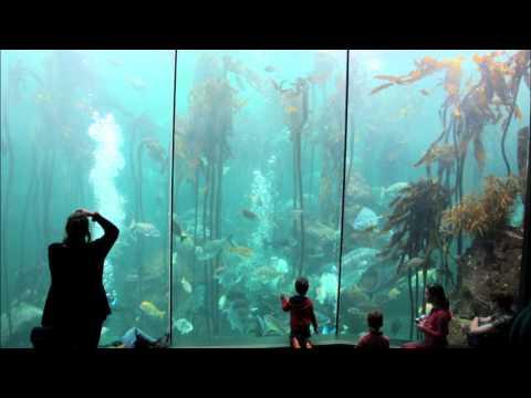 Conhece o gigante bambu do mar?
