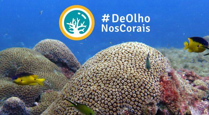 Dicas de organizações ambientais brasileiras para seguir nas redes sociais