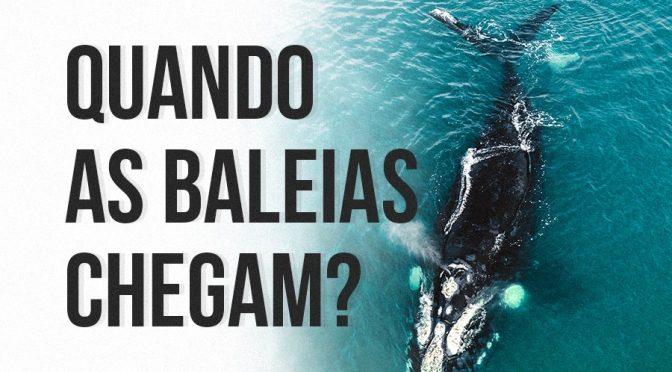 Fique a ver baleias!
